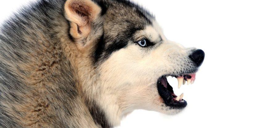 Was Passiert Wenn Ein Hund Aggressiv Reagiert Hundeservice Nürnberg