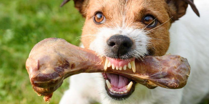 Slikovni rezultat za Fotos eines knurrenden Hundes
