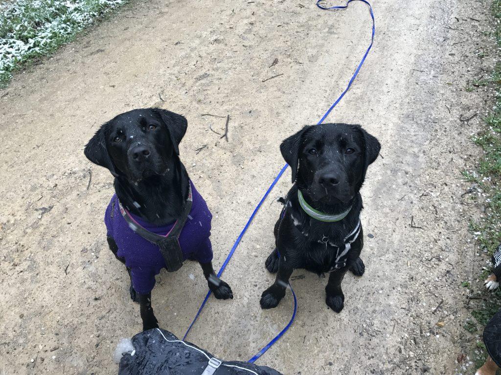 Hundesitter-Dogwalker-Hundebetreuung-Tagesbetreuung-Dogwalking-Nürnberg-Job-Integration