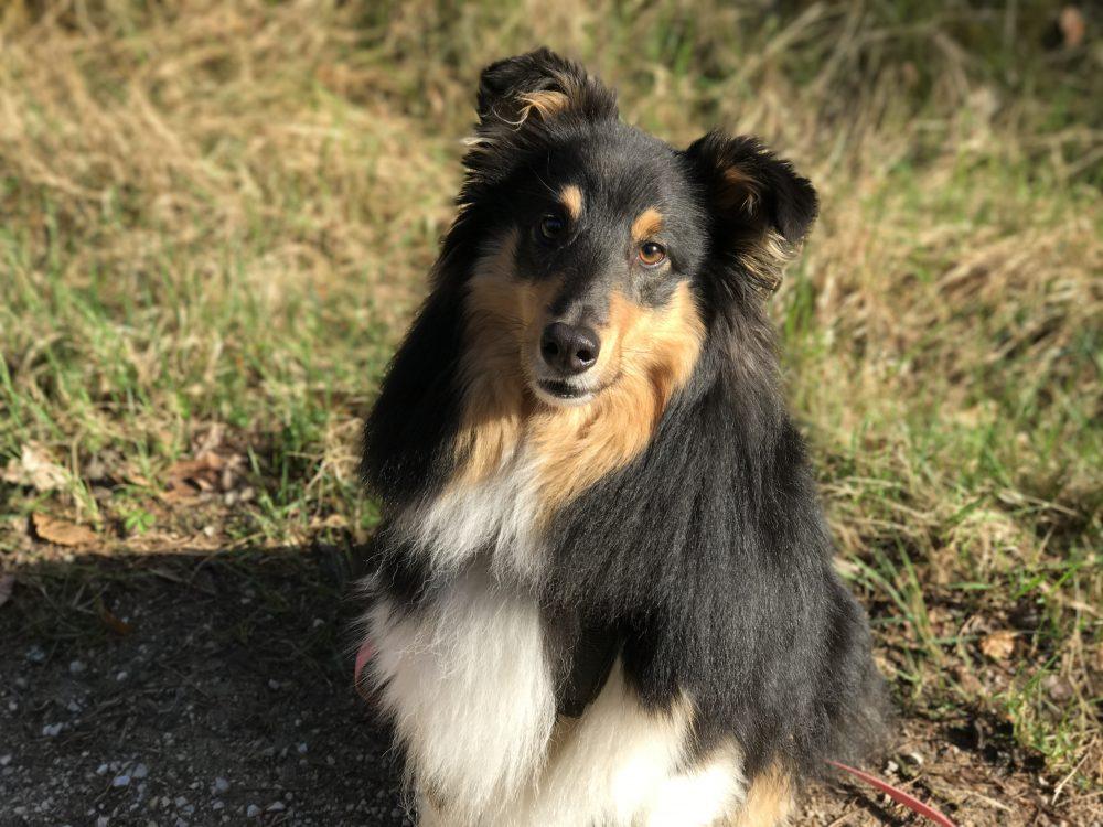 Hundesitter-Dogwalker-Hundebetreuung-Tagesbetreuung-Dogwalking-Nürnberg-Job-Integration-Einarbeitung-Erstbegegnung-Hundebegegnung-Begegnung-unkastrierte-Rüden