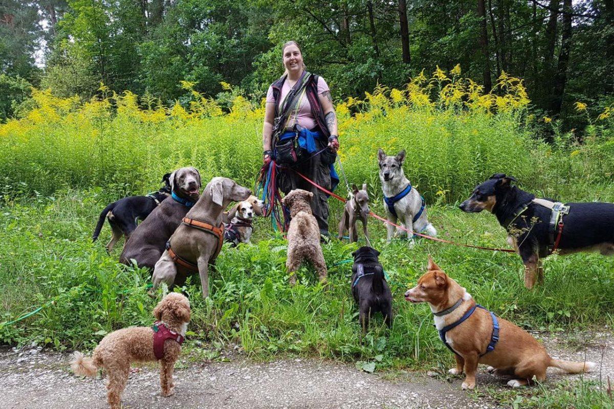 Hundeschule Nürnberg Hundetraining