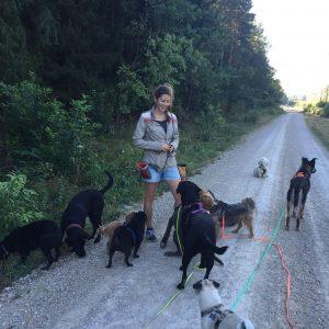 Silja Dold arbeitet seit Oktober 2016 für Sanny's Hundeservice und unterstützt im Bereich der Hundebetreuung und des Hundetrainings.