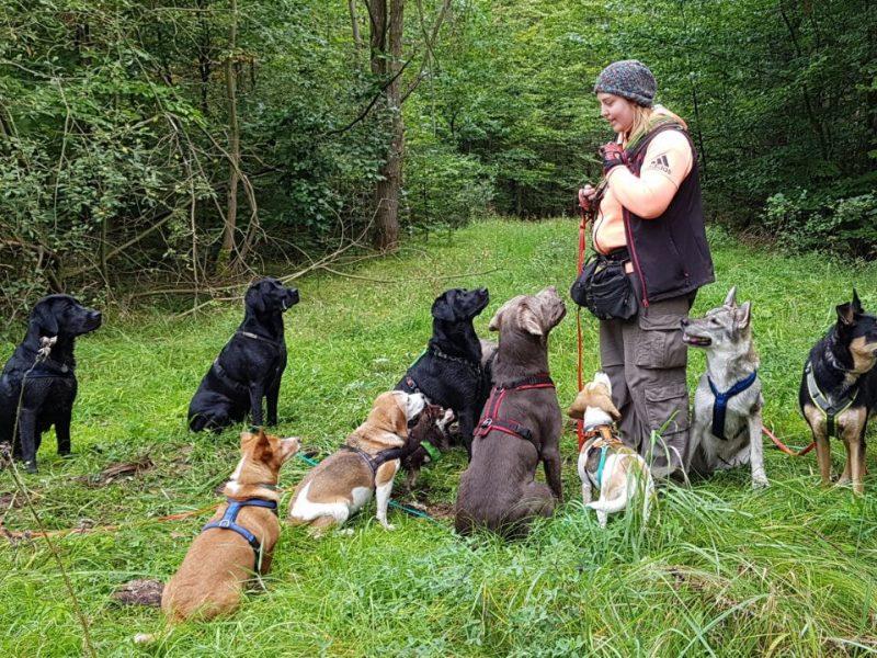 Die Tagesbetreuung ist für jeden Hund geeignet, der gern mit Artgenossen zusammen ist und nicht gern alleine bleibt.