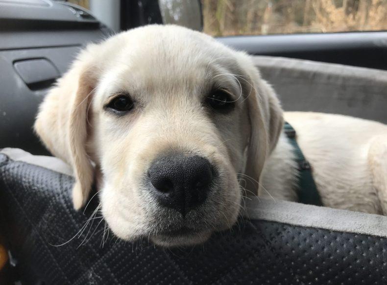 In unserer Welpenschule lernen Sie und Ihr Welpe im Einzeltraining Alles, was es für ein glückliches Hundeleben braucht.