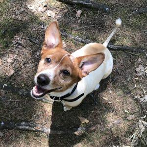 Sanny's Hundeservice Mitarbeiter Pips Hund Mischling