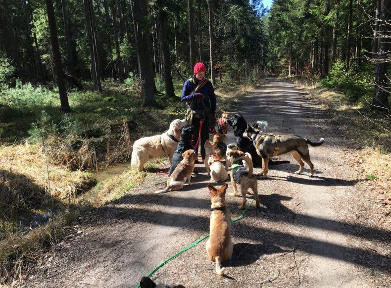 Hundepension Nürnberg Sanny's Hundeservice Hundebetreuung Fürth Urlaubsbetreuung Familiär Urlaub Hund Pension Familie
