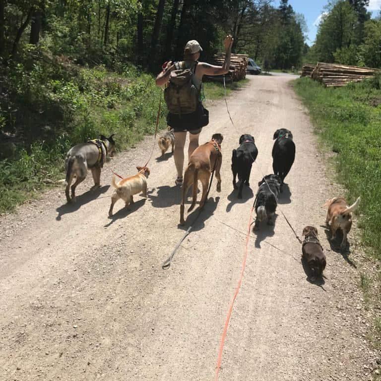 Job Dogwalker Hundesitter Ausbildung FAQ Überlegungen Selbstständigkeit eigene HUTA Hundepension eröffnen Hundekindergarten selbstständig machen Traumjob Hobby zum Beruf machen Hundebetreuer Weiterbildung