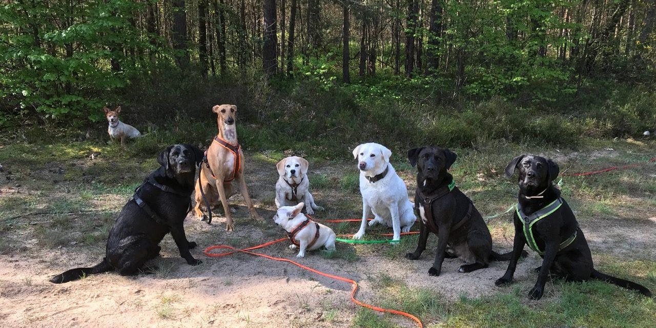 Job Als Hundesitter