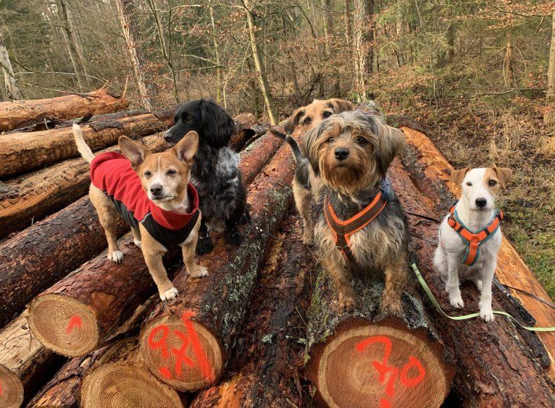 Hundebetreuung Nürnberg Hundepension Dogwalking Tagesbetreuung Urlaubsbetreuung